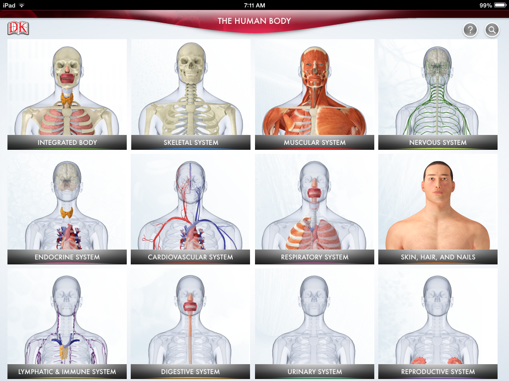 Organ Systems Of The Human Body For Kids