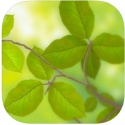 CellEnergy Photosynthesis Labs