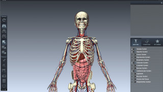Users select can select one or multiple body systems to display.