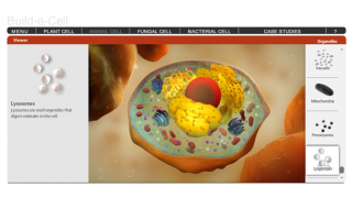 Complete the animal cell with the addition of lysosomes, and see a working cell in action.