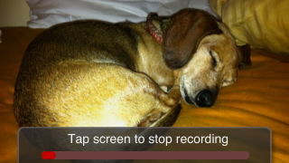 """Tap the red """"record"""" button to add up to 5 minutes of original narrative to a photo.The app's VU meter shows the audio input level (avoid getting into the red or audio will be distorted)."""