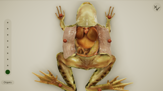 Follow instructions to do a very basic frog dissection.
