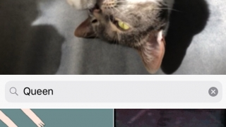 Giphy integration allows you to embed a GIF into your GIF.
