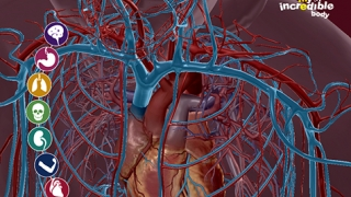 Learn how body systems interact with each other.