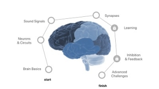 Carefully scaffolded tasks take students through basic to more complex neuroscience ideas.