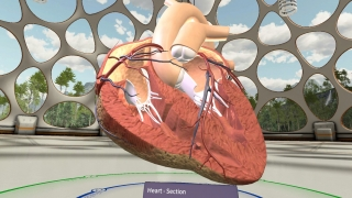 A wide array of 3D models are available, such as this human heart.