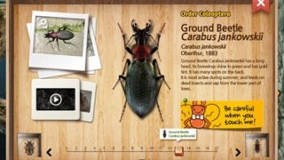 Kids can learn about insects from three different orders.
