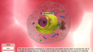 Tap to learn about an animal cell membrane.