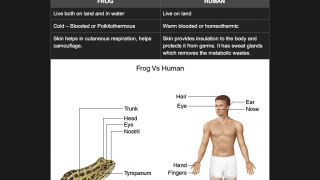 Compare and contrast frog and human anatomy.