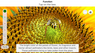 Students can also help pollinate a flower, starting the process again.
