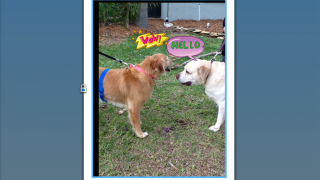 Expressive words in stickers help younger users tell simple stories with action.