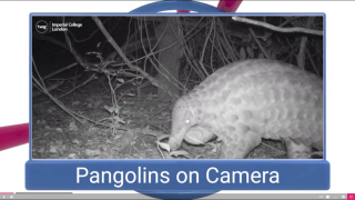 Videos give students a closer look at animals and other nature-based topics.