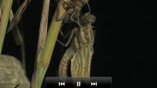 Brief video clips bring insects to life.