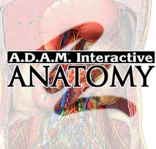 adam interactive anatomy online website